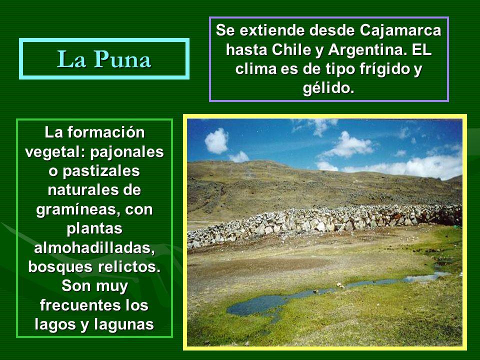 Se extiende desde Cajamarca hasta Chile y Argentina