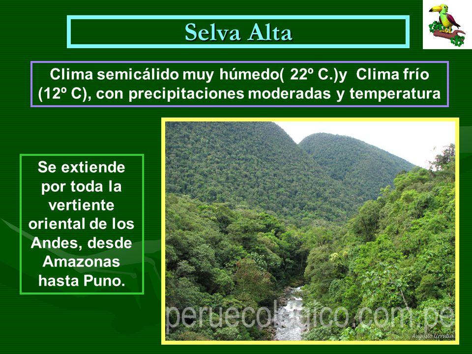 Selva Alta Clima semicálido muy húmedo( 22º C.)y Clima frío (12º C), con precipitaciones moderadas y temperatura.