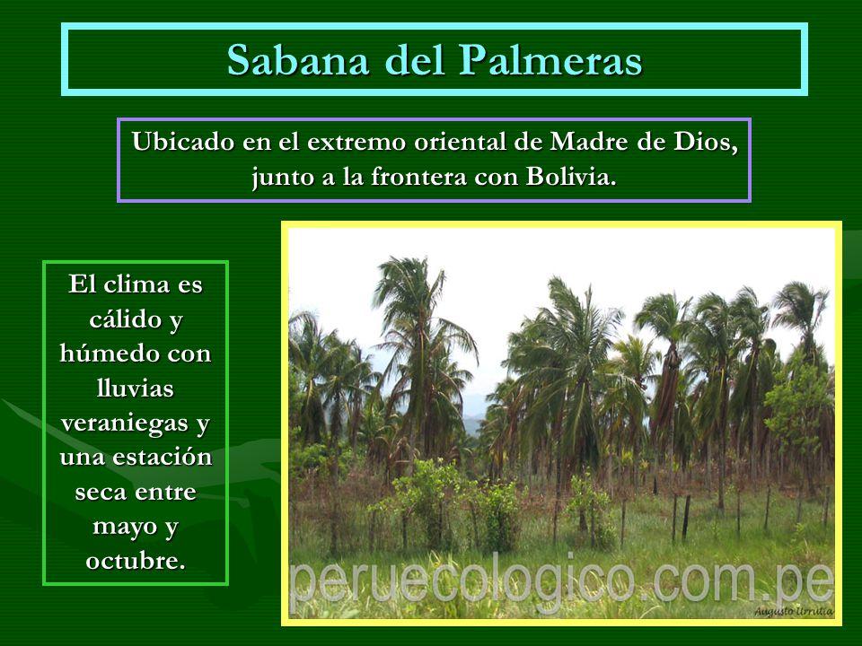 Sabana del Palmeras Ubicado en el extremo oriental de Madre de Dios, junto a la frontera con Bolivia.