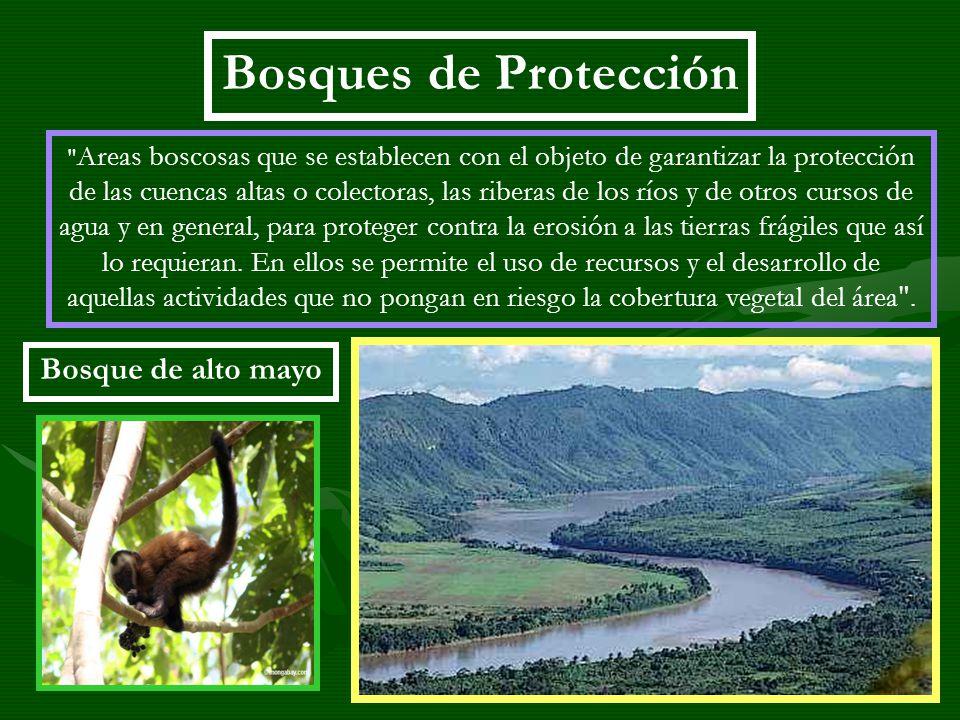 Bosques de Protección Bosque de alto mayo