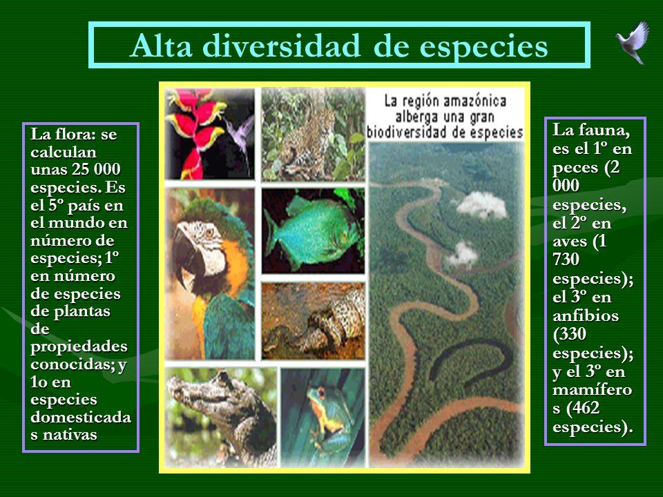Alta diversidad de especies