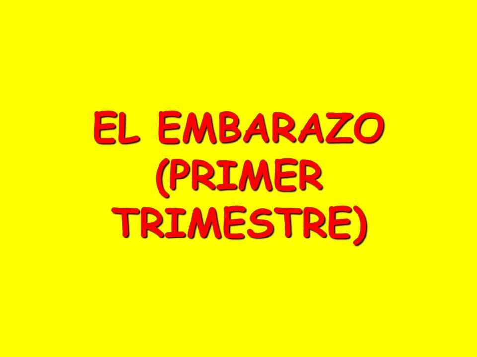 EL EMBARAZO (PRIMER TRIMESTRE)