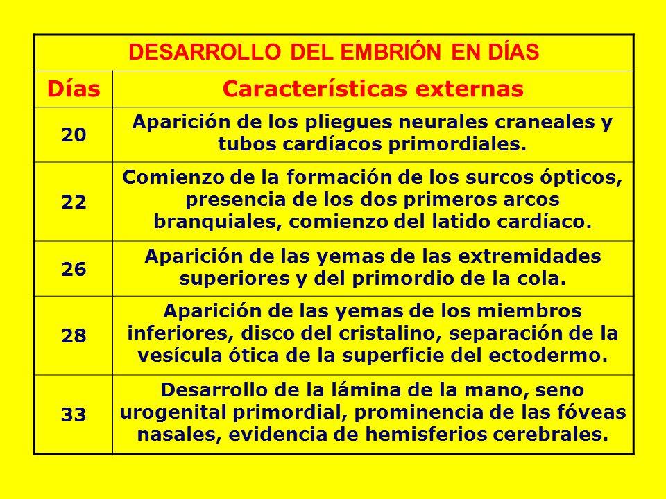 DESARROLLO DEL EMBRIÓN EN DÍAS Características externas