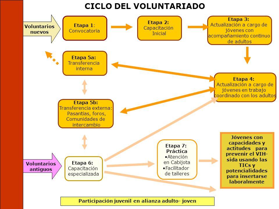 CICLO DEL VOLUNTARIADO Participación juvenil en alianza adulto- joven