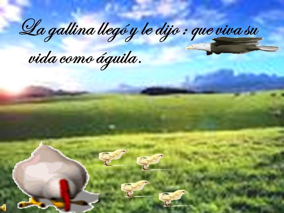 La gallina llegó y le dijo : que viva su vida como águila .