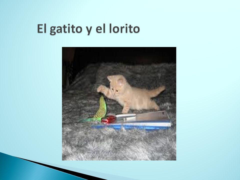 El gatito y el lorito