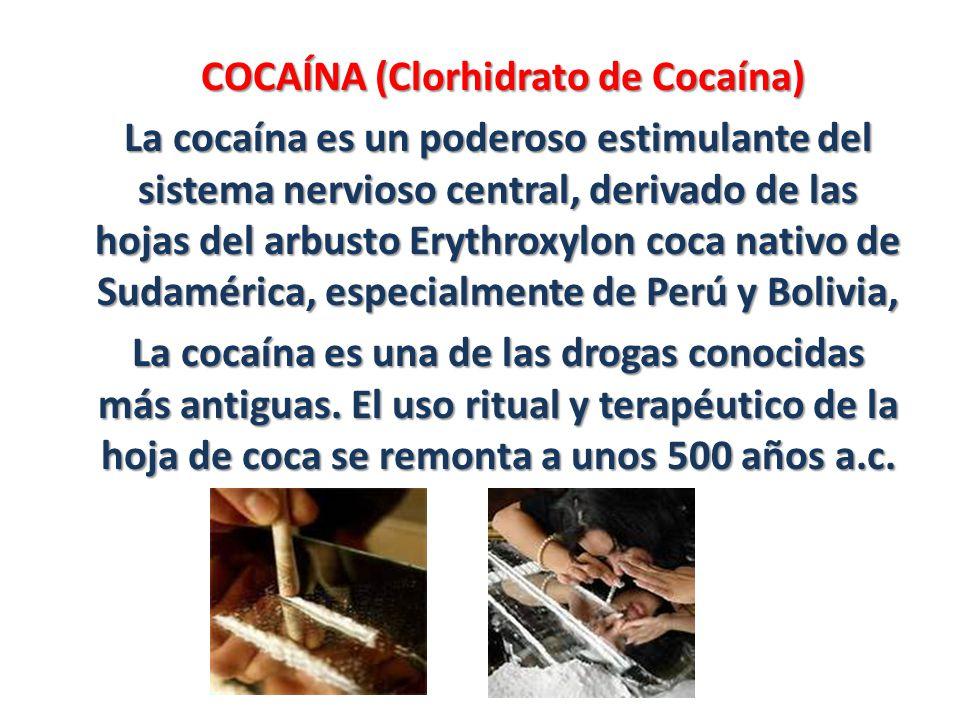 COCAÍNA (Clorhidrato de Cocaína)