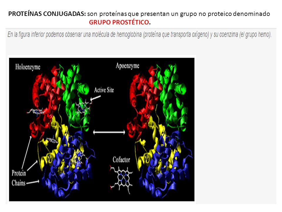 PROTEÍNAS CONJUGADAS: son proteínas que presentan un grupo no proteico denominado