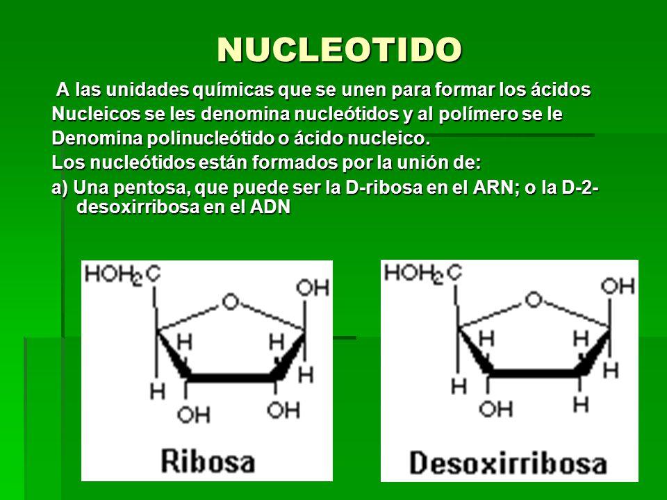 NUCLEOTIDO A las unidades químicas que se unen para formar los ácidos