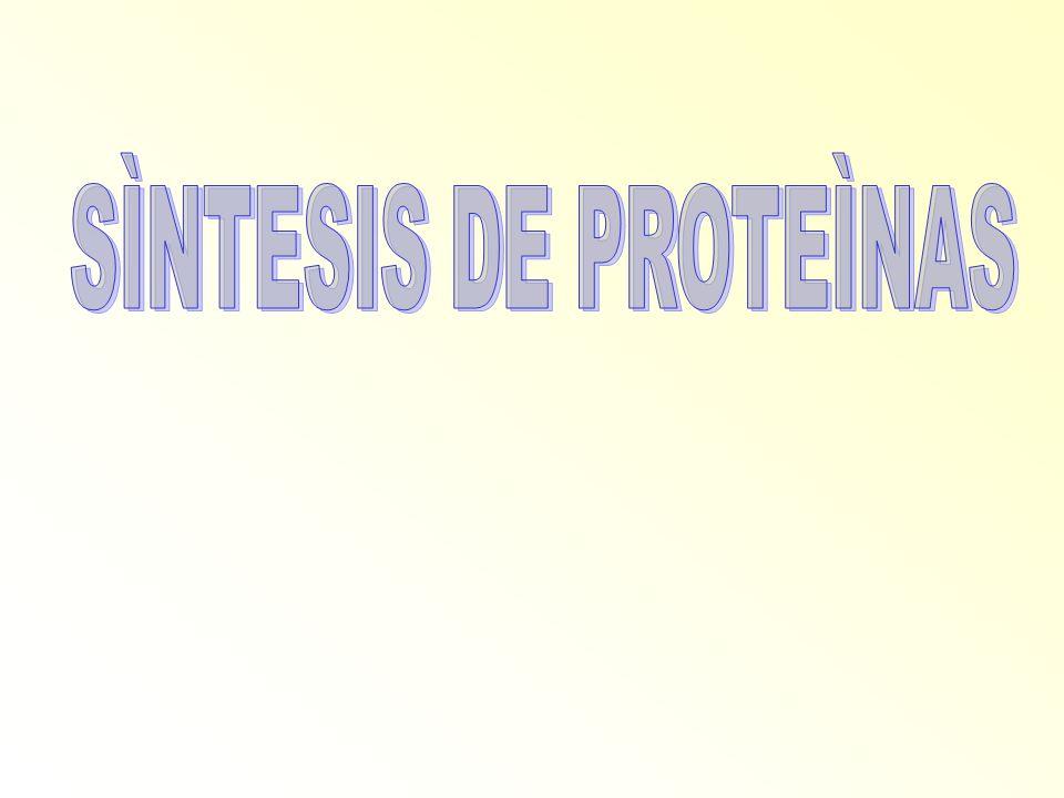 SÌNTESIS DE PROTEÌNAS