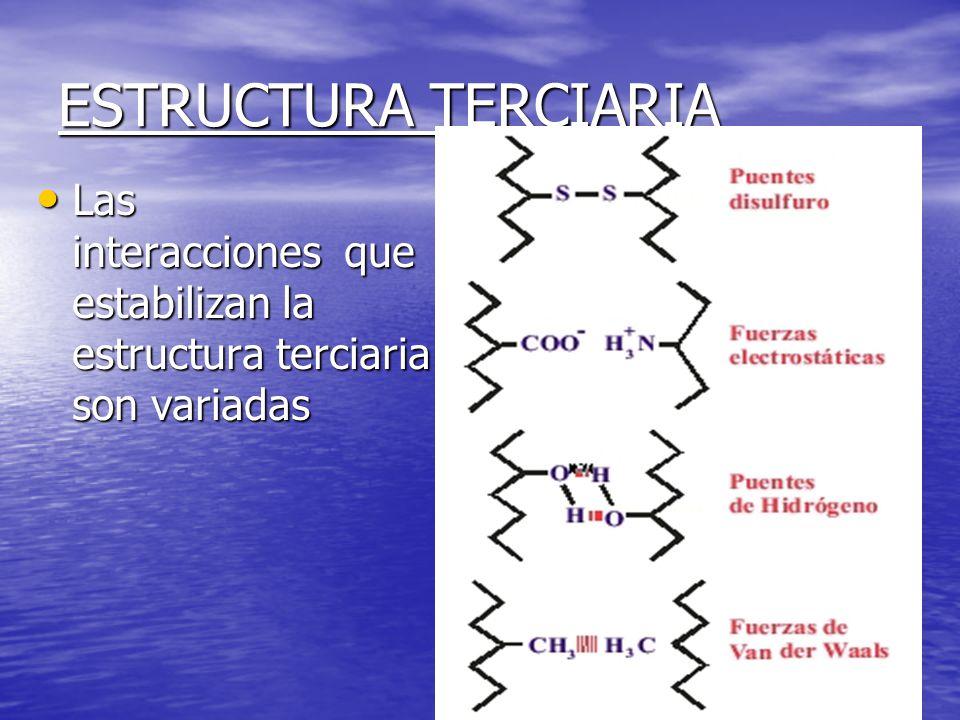 ESTRUCTURA TERCIARIA Las interacciones que estabilizan la estructura terciaria son variadas