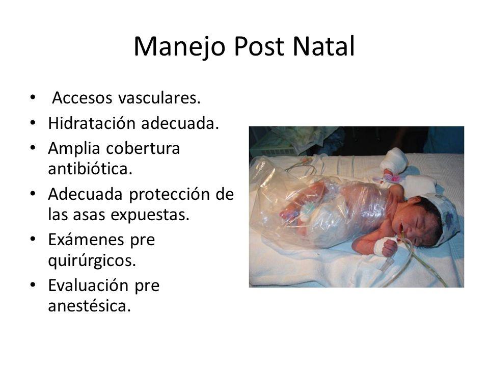 Manejo Post Natal Accesos vasculares. Hidratación adecuada.