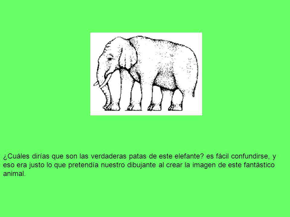 ¿Cuáles dirías que son las verdaderas patas de este elefante