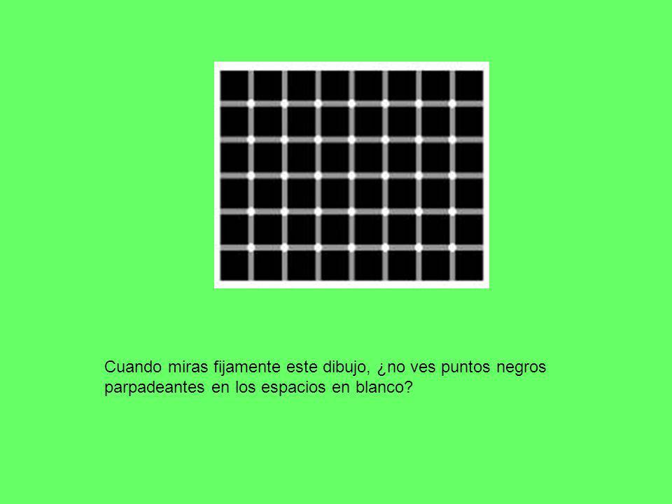 Cuando miras fijamente este dibujo, ¿no ves puntos negros parpadeantes en los espacios en blanco