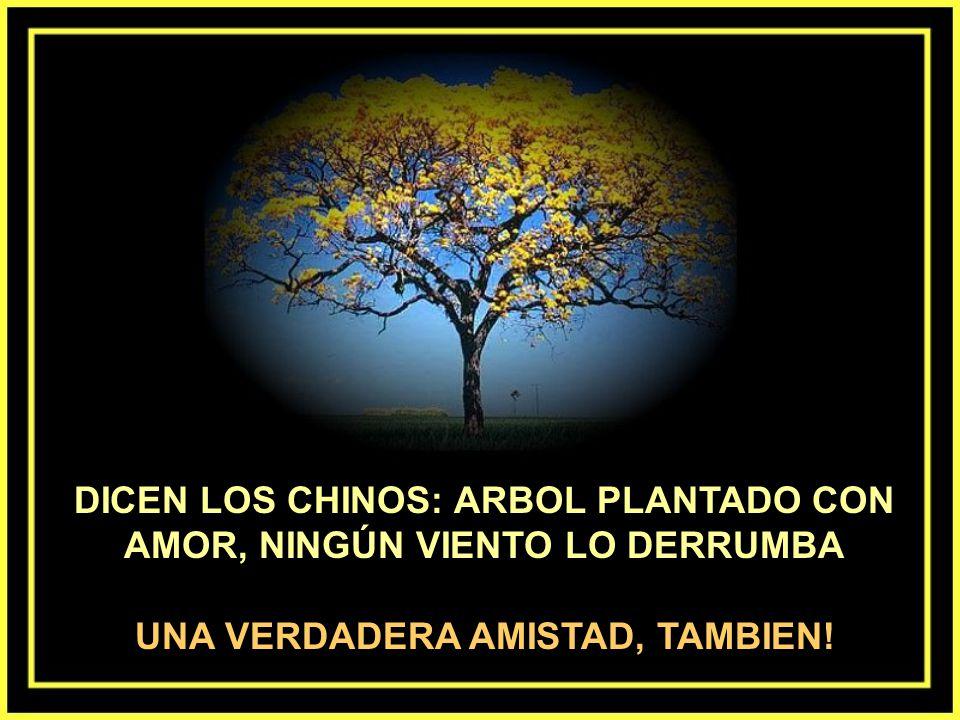 DICEN LOS CHINOS: ARBOL PLANTADO CON AMOR, NINGÚN VIENTO LO DERRUMBA