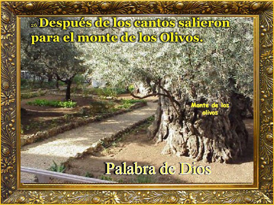 Palabra de Dios Monte de los olivos