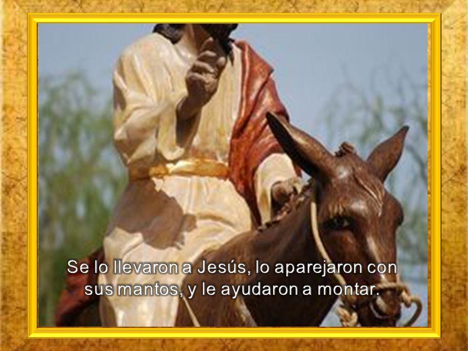 Se lo llevaron a Jesús, lo aparejaron con sus mantos, y le ayudaron a montar.
