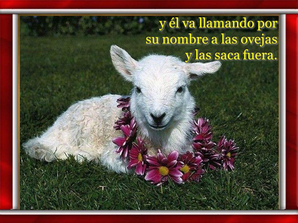 y él va llamando por su nombre a las ovejas y las saca fuera.