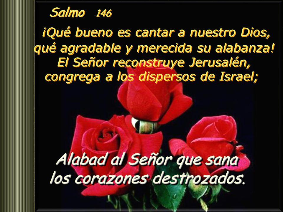 Alabad al Señor que sana los corazones destrozados.