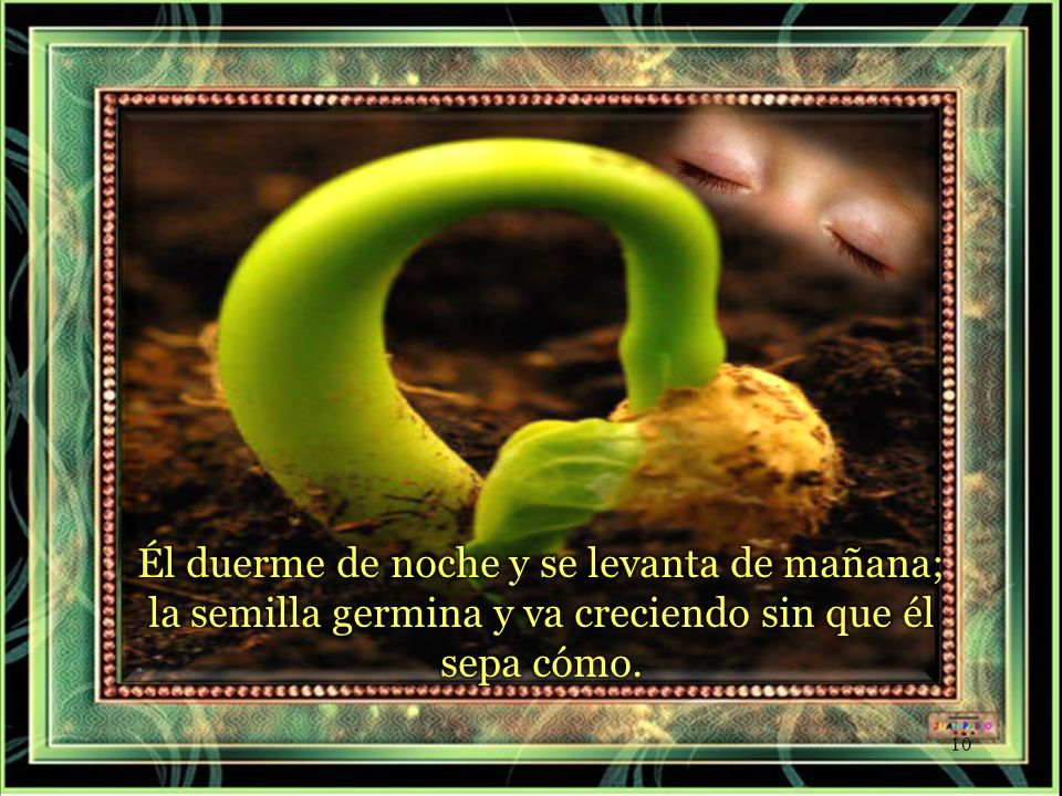 Él duerme de noche y se levanta de mañana; la semilla germina y va creciendo sin que él sepa cómo.