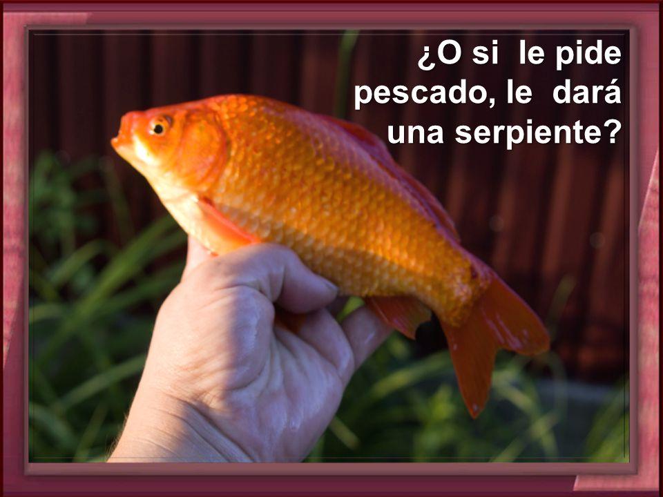 ¿O si le pide pescado, le dará una serpiente