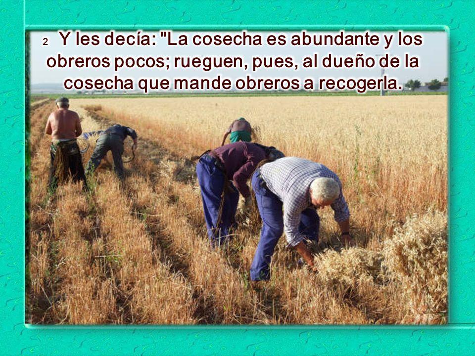 2 Y les decía: La cosecha es abundante y los obreros pocos; rueguen, pues, al dueño de la cosecha que mande obreros a recogerla.