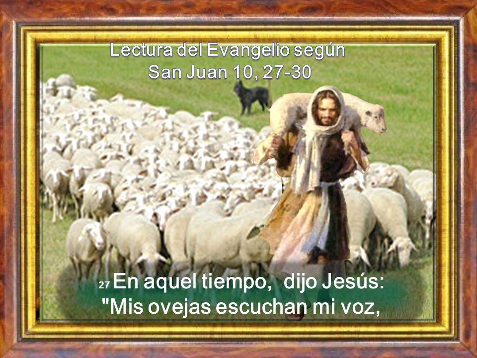 Lectura del Evangelio según San Juan 10, 27-30
