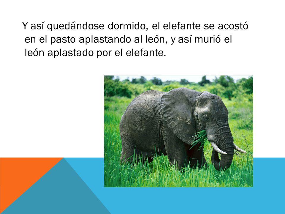Y así quedándose dormido, el elefante se acostó en el pasto aplastando al león, y así murió el león aplastado por el elefante.