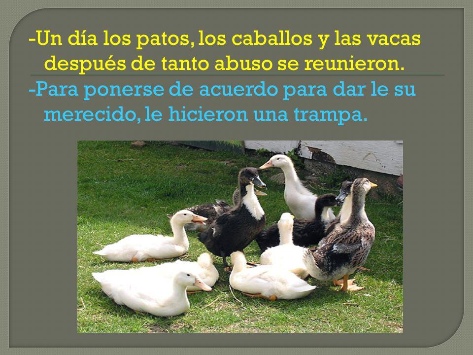 -Un día los patos, los caballos y las vacas después de tanto abuso se reunieron.