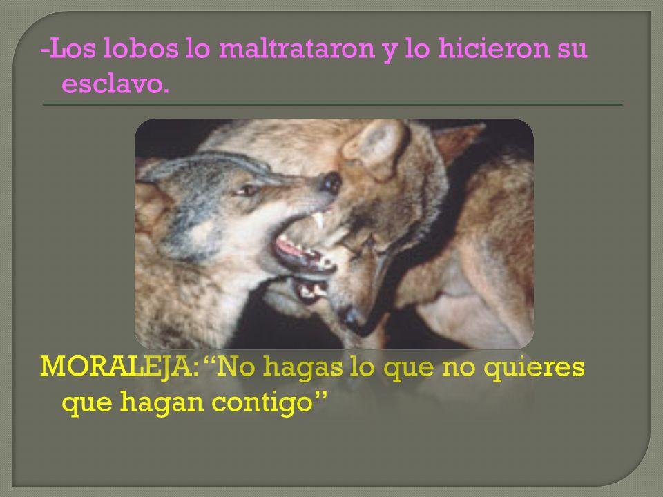 -Los lobos lo maltrataron y lo hicieron su esclavo