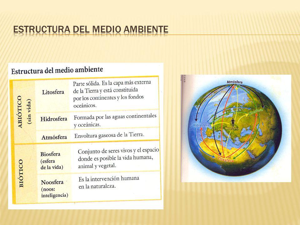 Estructura del medio ambiente