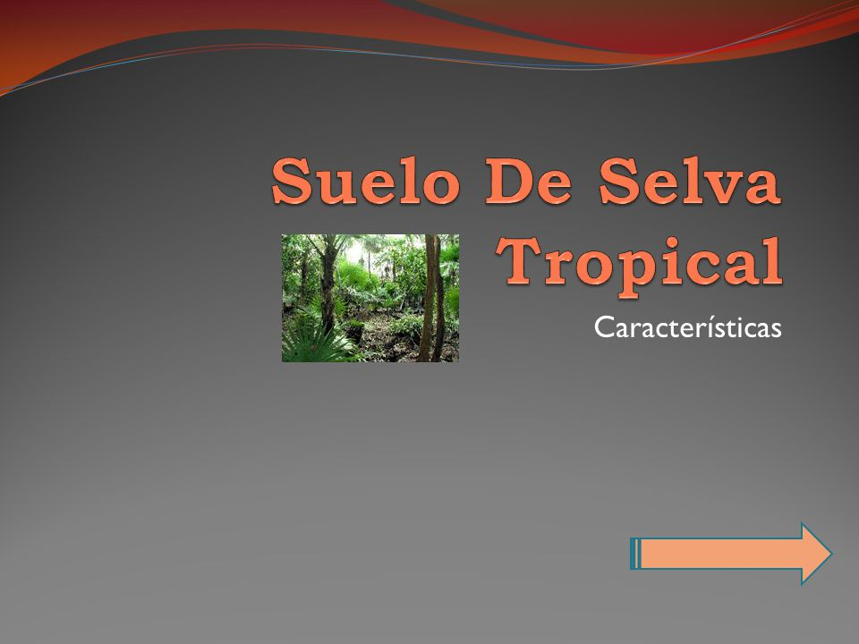 Suelo De Selva Tropical