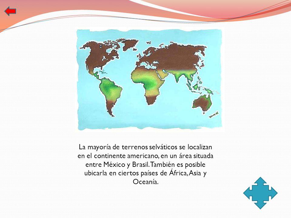 La mayoría de terrenos selváticos se localizan en el continente americano, en un área situada entre México y Brasil. También es posible ubicarla en ciertos países de África, Asia y Oceanía.