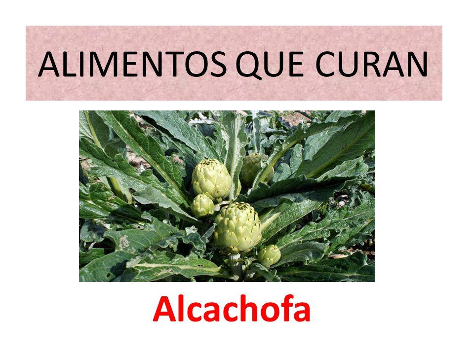 ALIMENTOS QUE CURAN Alcachofa