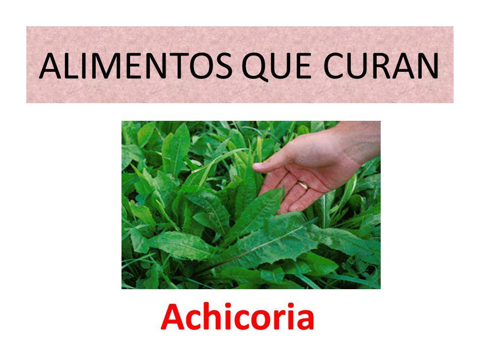 ALIMENTOS QUE CURAN Achicoria