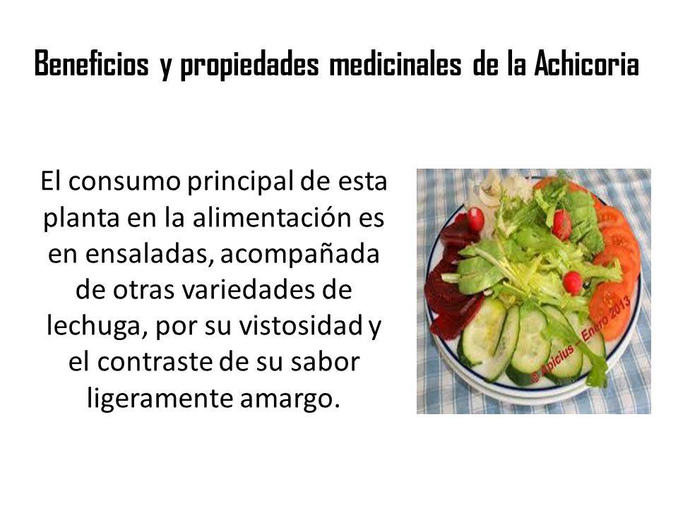Beneficios y propiedades medicinales de la Achicoria