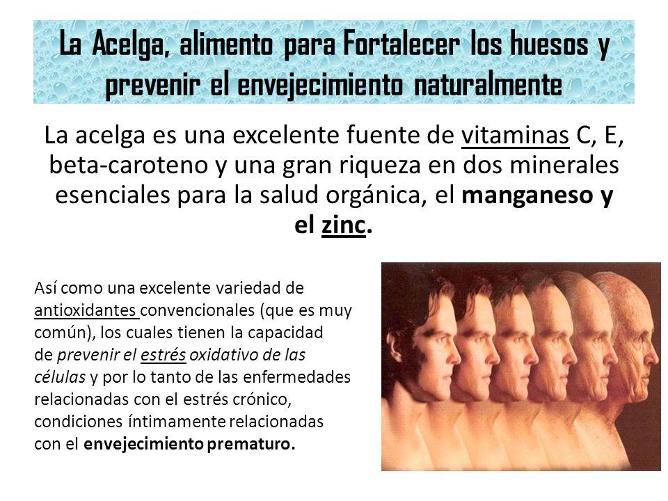 La Acelga, alimento para Fortalecer los huesos y prevenir el envejecimiento naturalmente