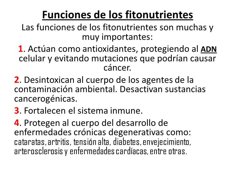 Funciones de los fitonutrientes
