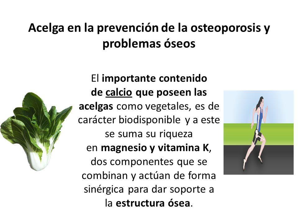 Acelga en la prevención de la osteoporosis y problemas óseos