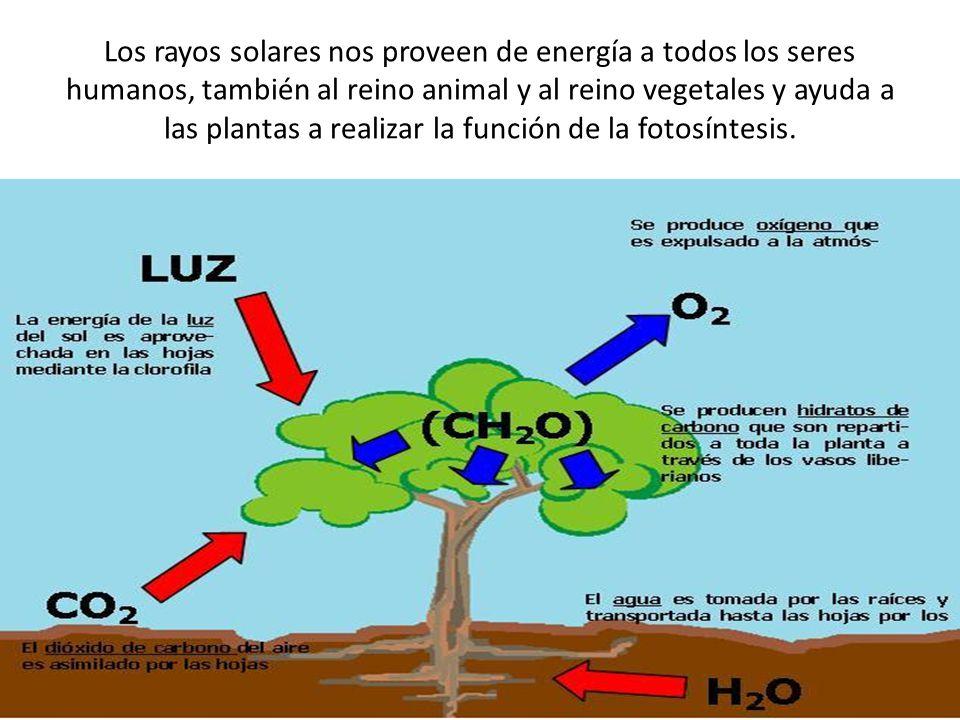 Los rayos solares nos proveen de energía a todos los seres humanos, también al reino animal y al reino vegetales y ayuda a las plantas a realizar la función de la fotosíntesis.