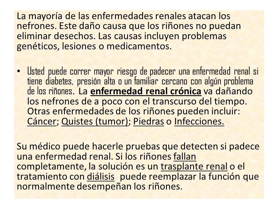 La mayoría de las enfermedades renales atacan los nefrones