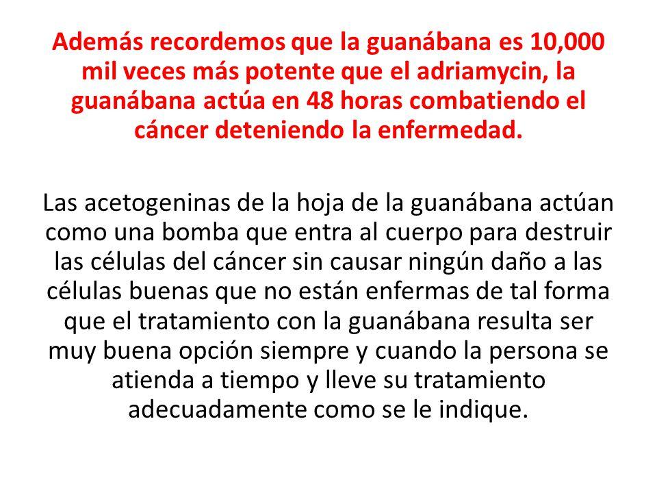 Además recordemos que la guanábana es 10,000 mil veces más potente que el adriamycin, la guanábana actúa en 48 horas combatiendo el cáncer deteniendo la enfermedad.