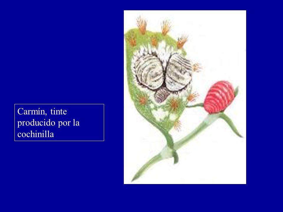 Carmín, tinte producido por la cochinilla
