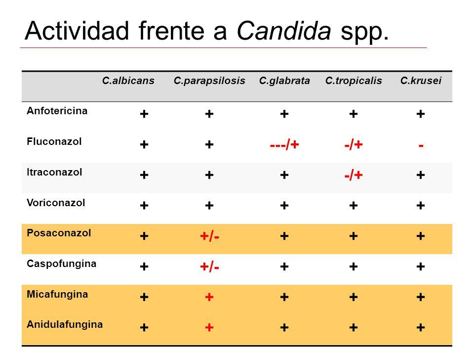 Actividad frente a Candida spp.