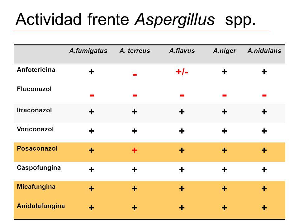 Actividad frente Aspergillus spp.