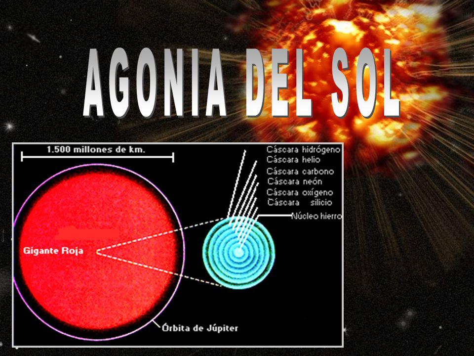 AGONIA DEL SOL