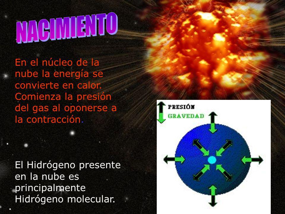 NACIMIENTO En el núcleo de la nube la energía se convierte en calor. Comienza la presión del gas al oponerse a la contracción.
