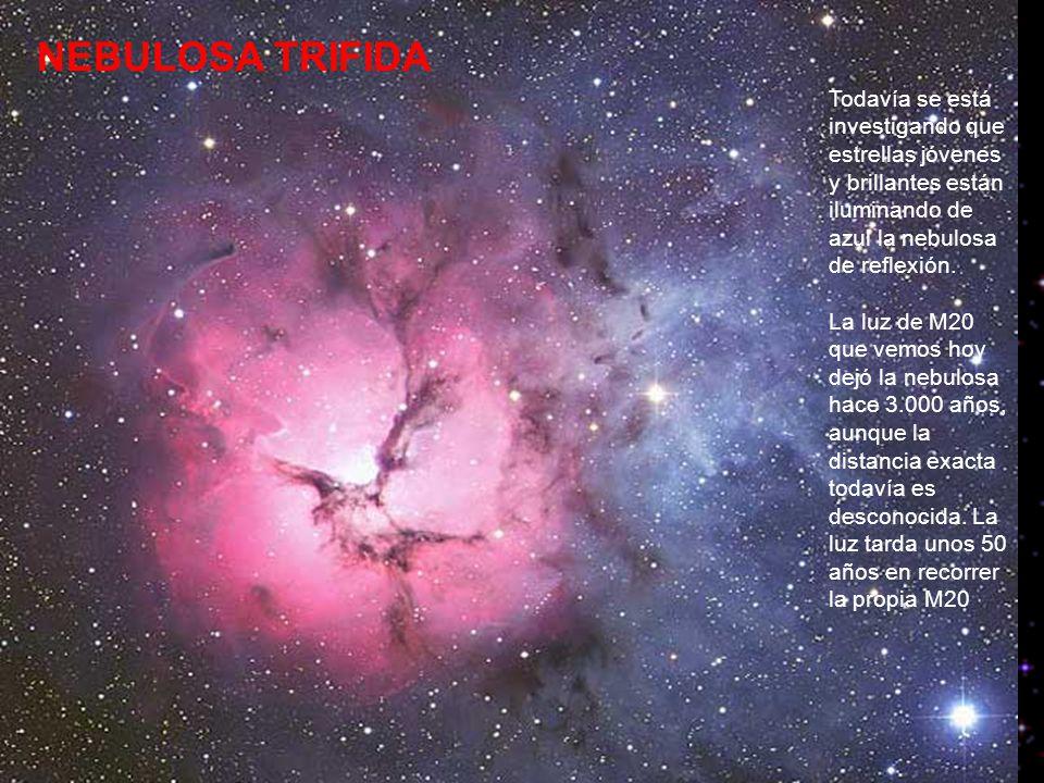 NEBULOSA TRIFIDA Todavía se está investigando que estrellas jóvenes y brillantes están iluminando de azul la nebulosa de reflexión.