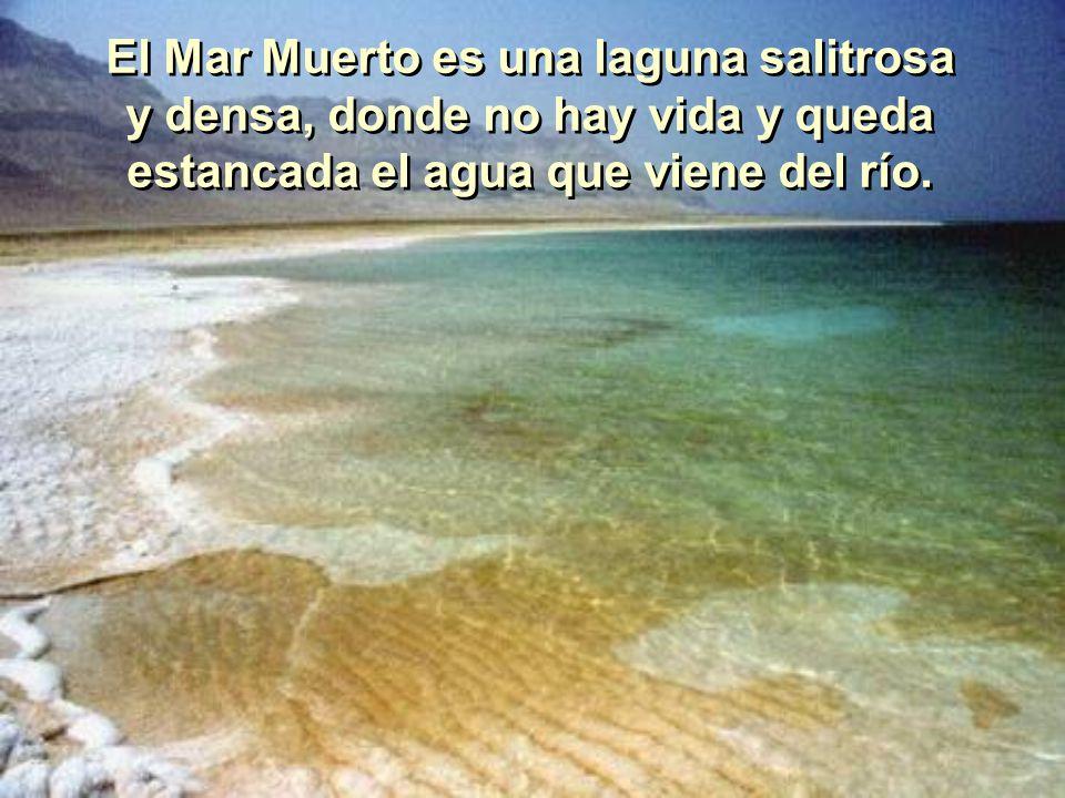 El Mar Muerto es una laguna salitrosa