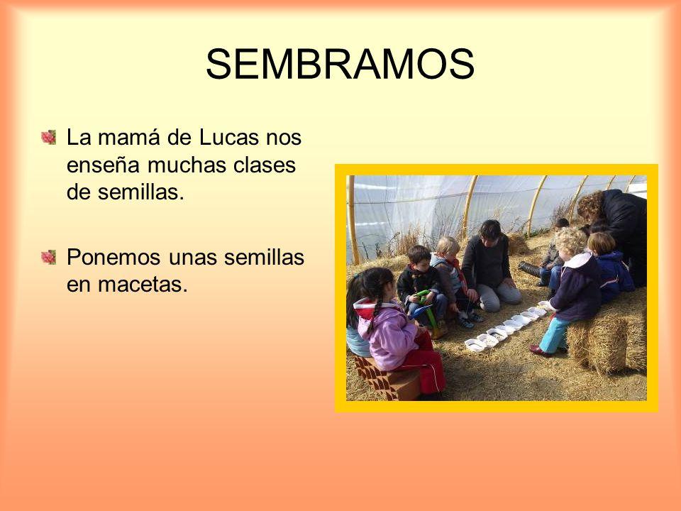 SEMBRAMOS La mamá de Lucas nos enseña muchas clases de semillas.